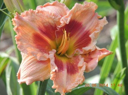 FOTKA - Poslední jarní den - denivka oranžová