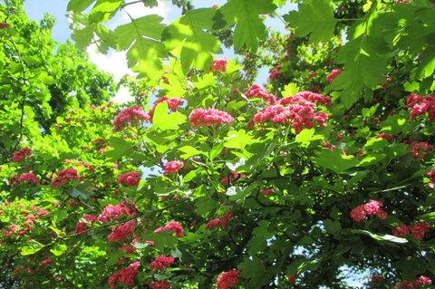 FOTKA - Začátkem května - strom u školy