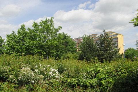 FOTKA - Začátkem května - paneláky už zarůstají