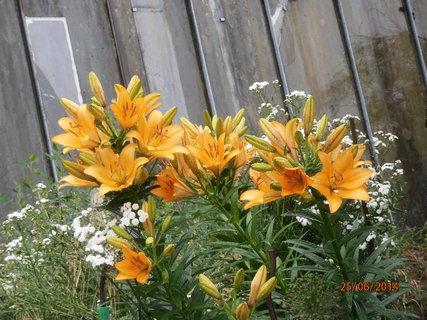 FOTKA - Každý den je květů více 25.6. 2014