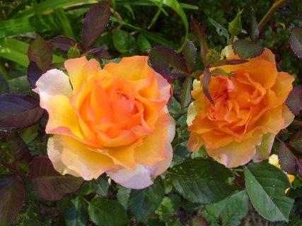 FOTKA - oranžové