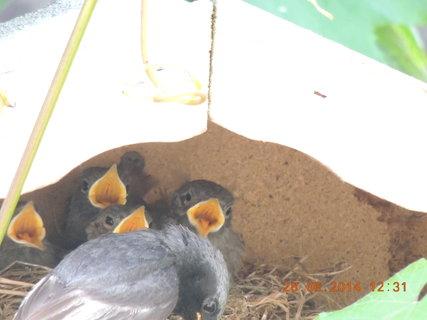 FOTKA - Dnes už je hnízdo prázdné