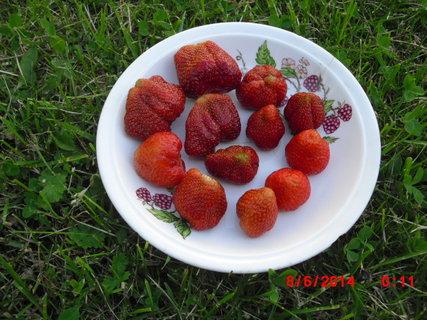 FOTKA - jahody
