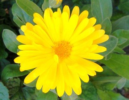 FOTKA - Žlutý měsíček