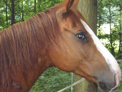FOTKA - kůň zblízka