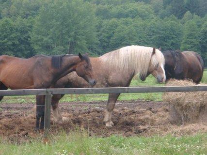 FOTKA - koně v ohradě