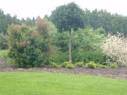 FOTKA - zahrada na ranči