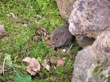 FOTKA - Myš