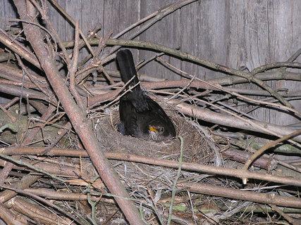 FOTKA - Kosice na hnízdě