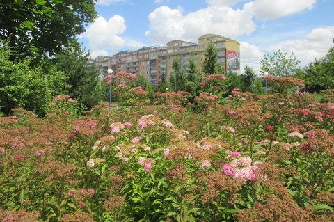 FOTKA - Dnes  dopoledne - paneláky v květu