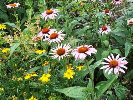 FOTKA - Pěkně kvetou.