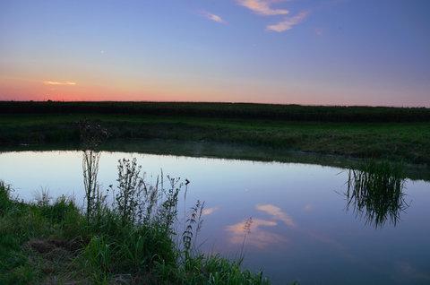 FOTKA - Bodlák u vody
