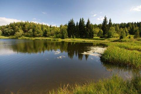 FOTKA - Kvetoucí Černý rybník