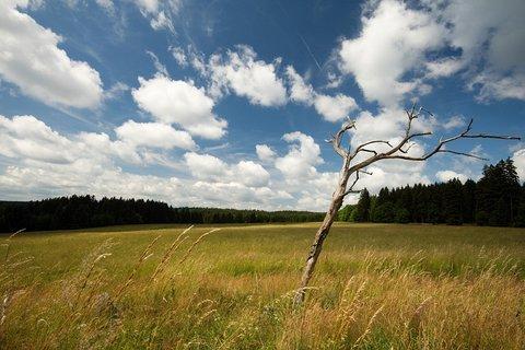 FOTKA - Louky nad Prameny
