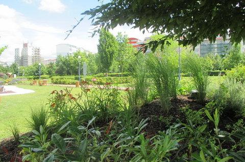 FOTKA - Přes okrasnou trávu