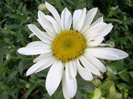 FOTKA - Ještě kvetou.