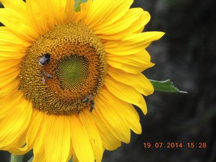 FOTKA - Hostina na slunečnici 19.7. 2014