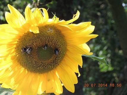 FOTKA - Večeře na slunečnici 20.7. 2014