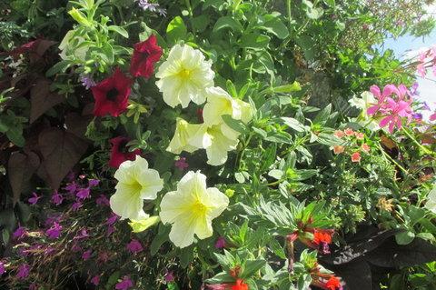 FOTKA - Květinová věž na sídlišti - vedle sebe jsou tři