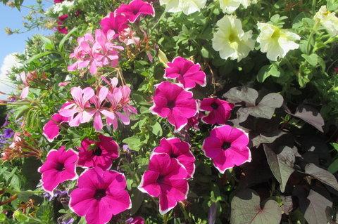 FOTKA -  Květinový sloup anebo  Kytičkový sloup