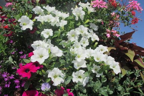 FOTKA - Barvy květin sídliště oživí