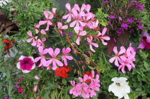 FOTKA - Květinová věž   - i s něžnými květy