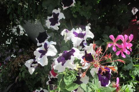 FOTKA - Květinová věž   - s květy všech barev