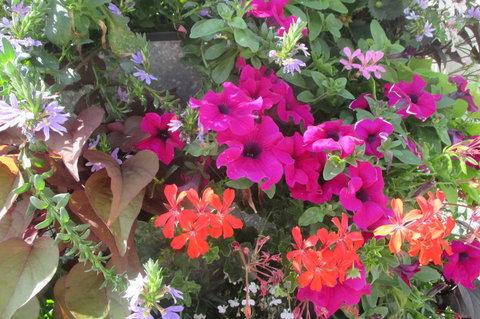 FOTKA - Květinová věž   - kombinace barev je kouzelná