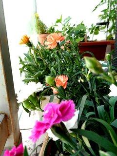 FOTKA - Moje džungle na balkoně,ale ještě se tam vejdu!