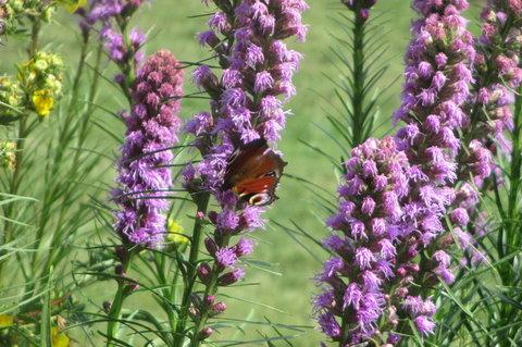 FOTKA - Místo  mé přírodní Knihovny -  čtu si mezi květinami a motýlky
