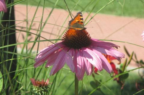 FOTKA - Místo  mé přírodní Knihovny - motýlků je tu hodně