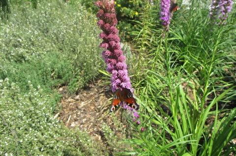 FOTKA - Místo  mé přírodní Knihovny -  motýlkům chutná