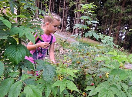FOTKA - na mezích v horách rostou nejsladší maliny