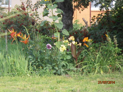 FOTKA - Všeho chuť- od květin po rybíz vpozadí 21.7. 2014