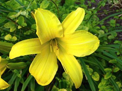 FOTKA - Detail žluté.