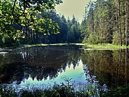 FOTKA - Tajemné lesní rybníky