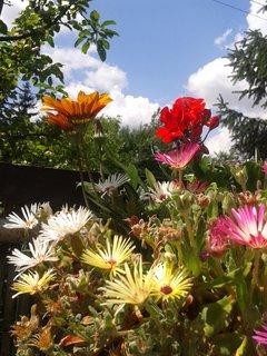 FOTKA - V poledne už kveteme