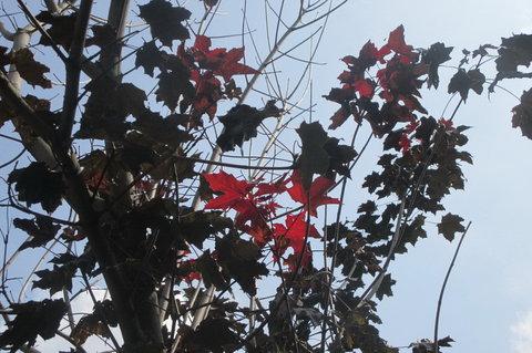 FOTKA - Ozdobný stromek