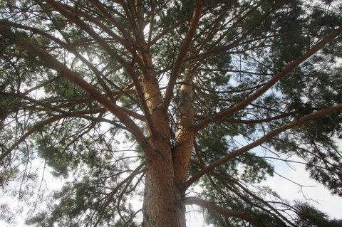 FOTKA - Stromek na zahrádce
