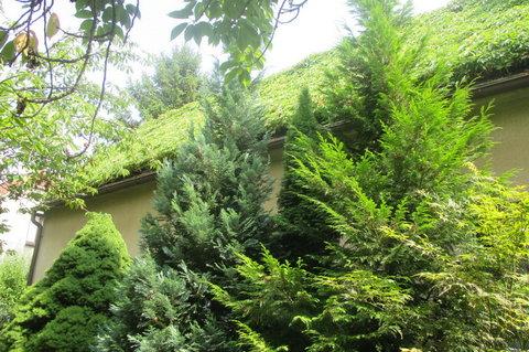 FOTKA - Zarostlá střecha
