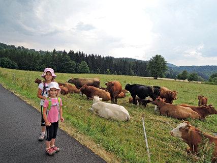 FOTKA - kravičky na horské louce,