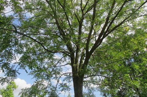 FOTKA - Ned�ln� poledne - ve st�nu stromu