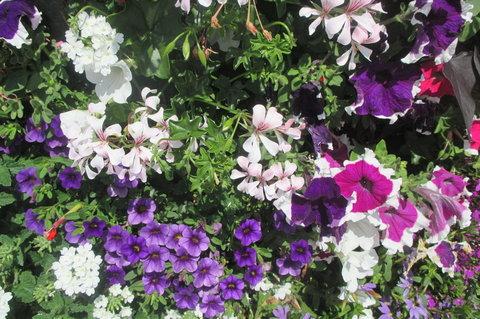 FOTKA - Nedělní poledne -  další  fialové květy na květinovém sloupu