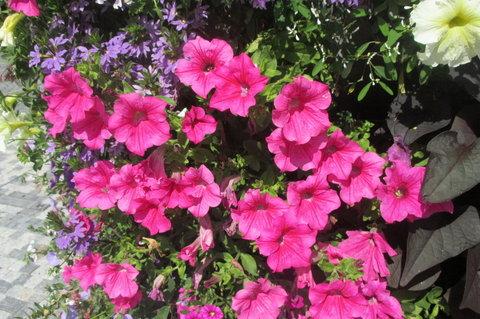 FOTKA - Nedělní poledne -  další  červené  květy
