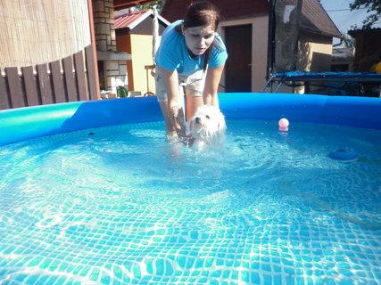 FOTKA - Ve vodě je v létě prima