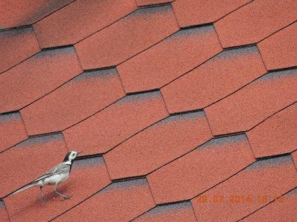 FOTKA - Kontrola střechy 29.7. 2014