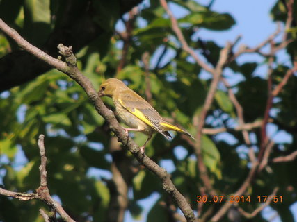 FOTKA - Prosím, co je to za ptáčka? Kdo to ví?