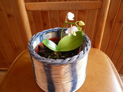 FOTKA - omladek z orchideje