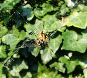 FOTKA - rozbila se mu pavucina i s obedem