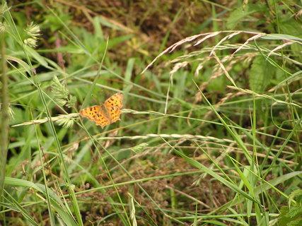 FOTKA - motýlek odpočívá